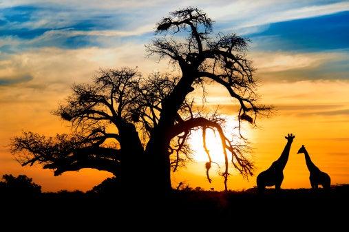 Sub-Saharan Africa Beckons