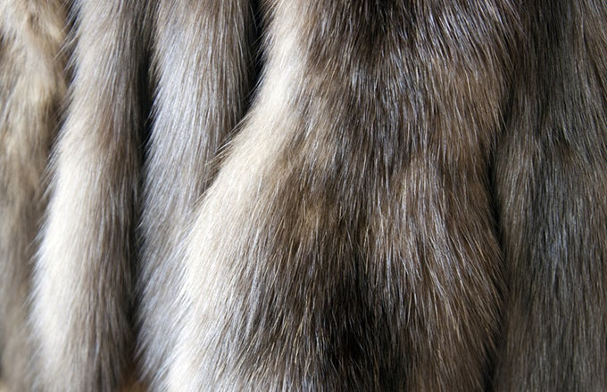 Buying Fur: Which Variety Is Worth the Most? | Investopedia