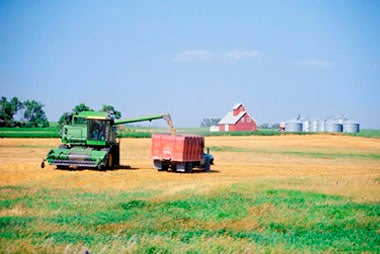 Should You Invest In Agricultural Commodities And Stocks?